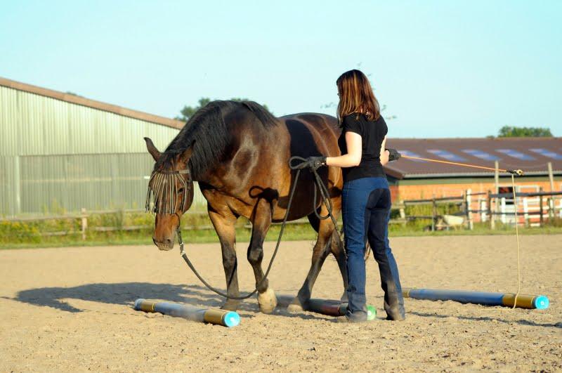 Hest der trænes fra jorden.