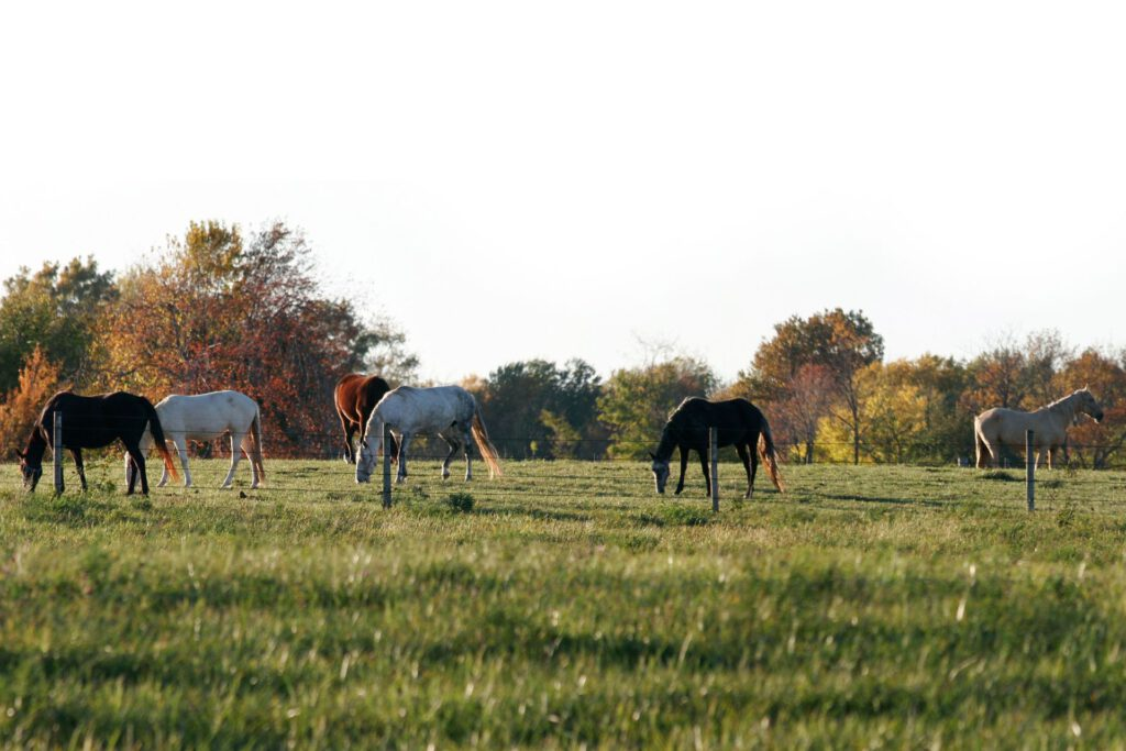 Heste på fold