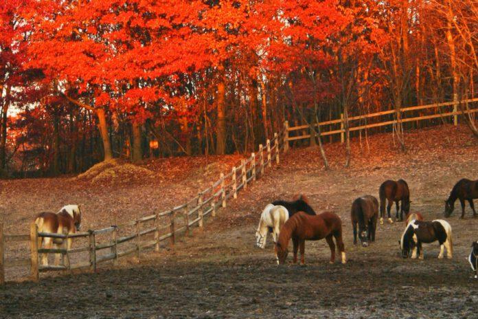 Hestefold efterår