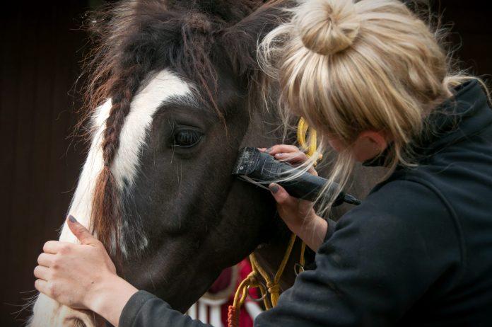 Klippe hest i hovedet