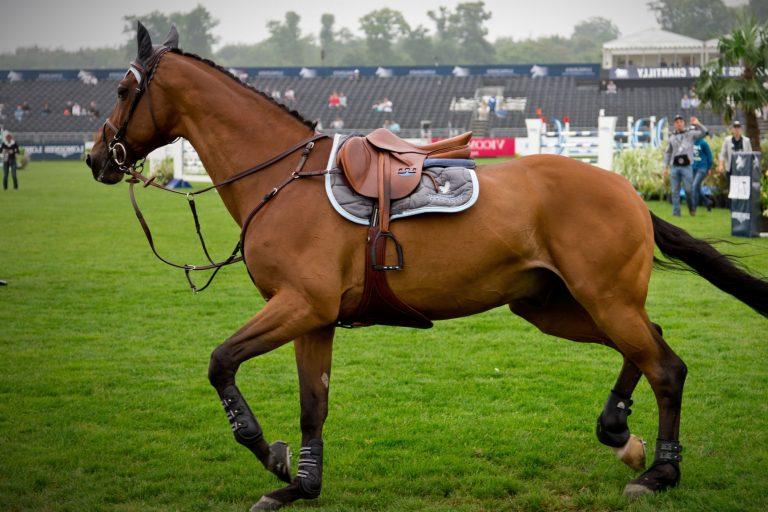 Undersøgelse: Mange ryttere prioriterer hestens sikkerhed over sin egen