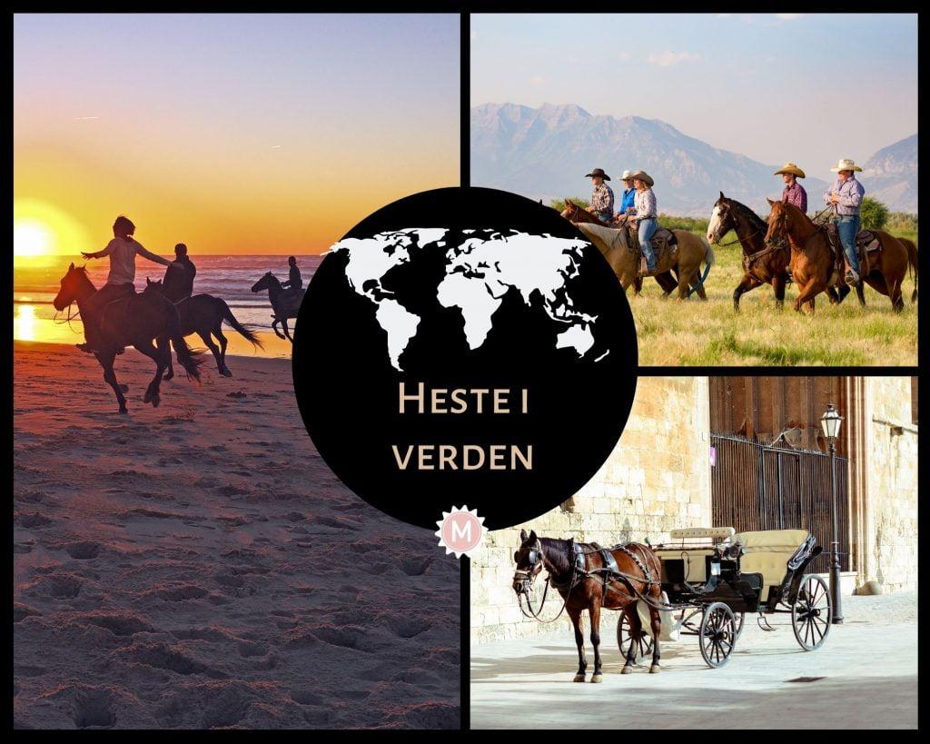 Kollage med billeder af heste i verden; en hestevogn, på en ranch og på en strand.