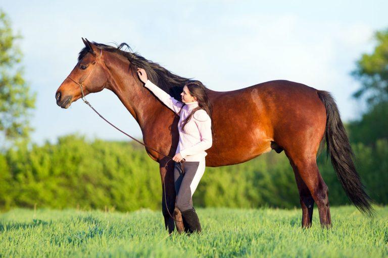 Trækker eller går du med hesten?