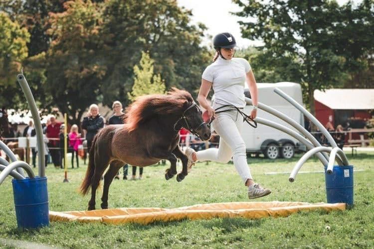 pony hop
