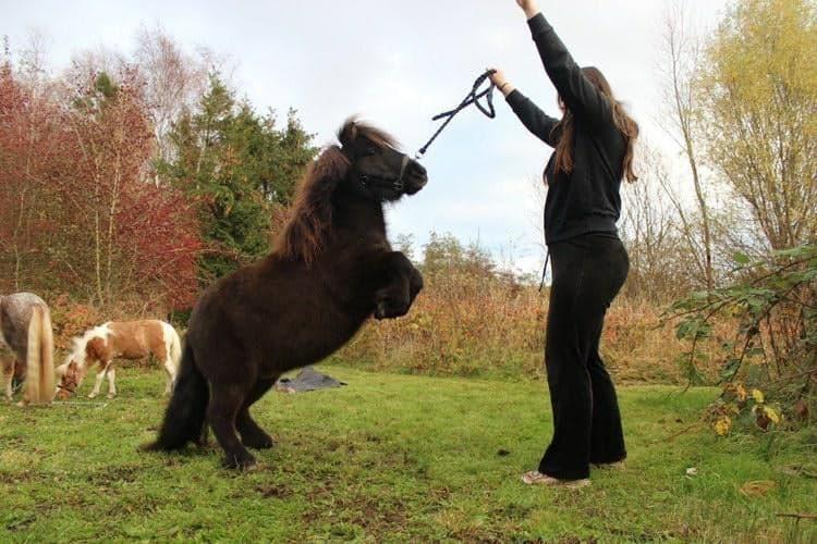 pony tricks