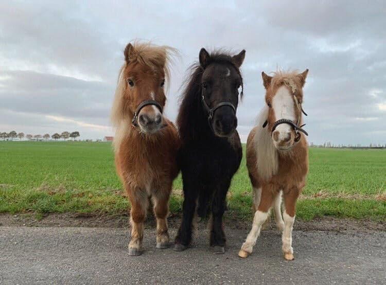 tre ponyer