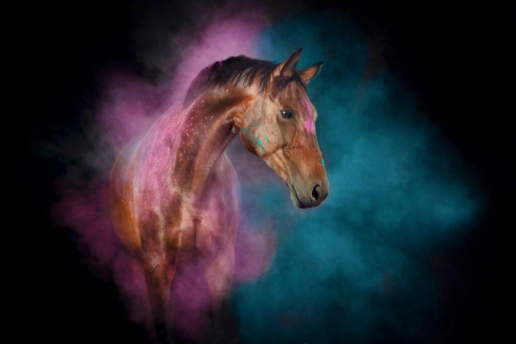 Hest med lilla og blå holi-pulver