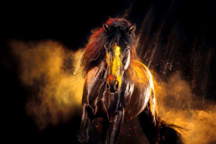 Sort hest i gyldne farver