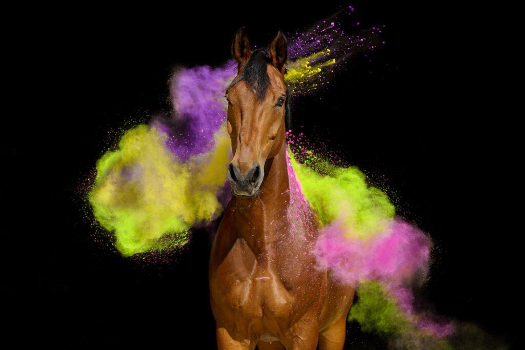 Foto af brun hest med holi-pulver