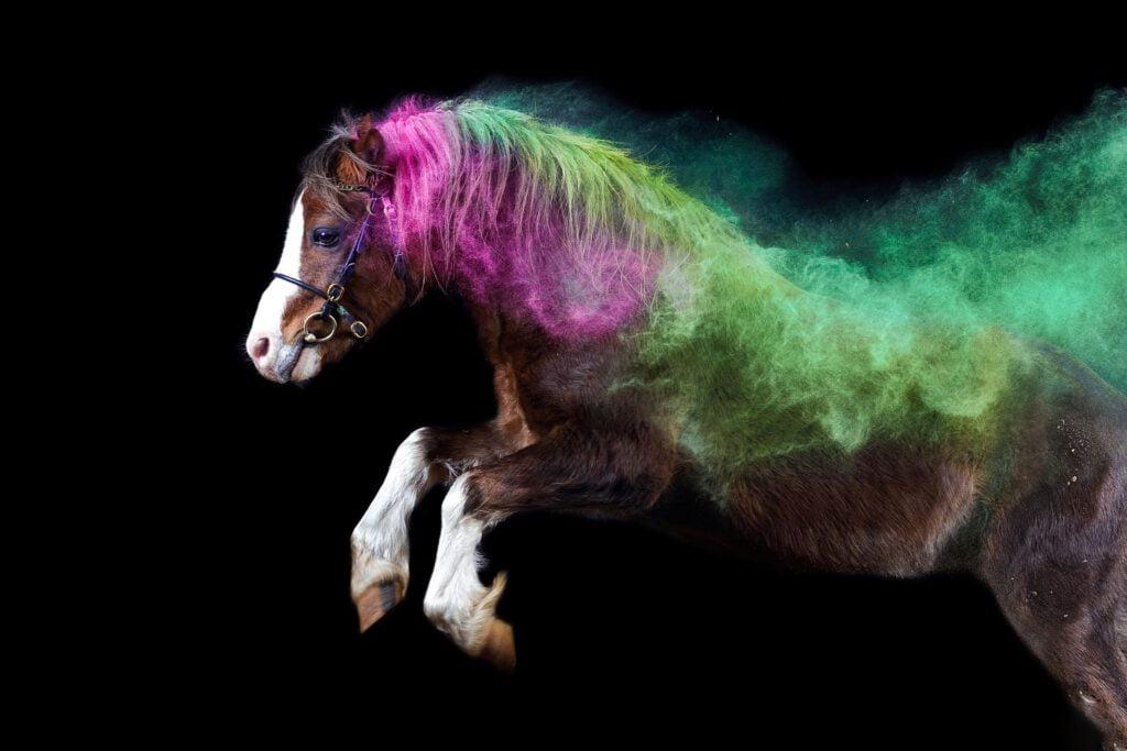 Foto af pony i holi-pulver