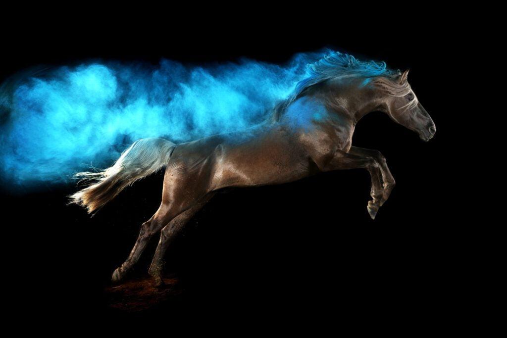 Foto af sort hest med blåt holi-pulver