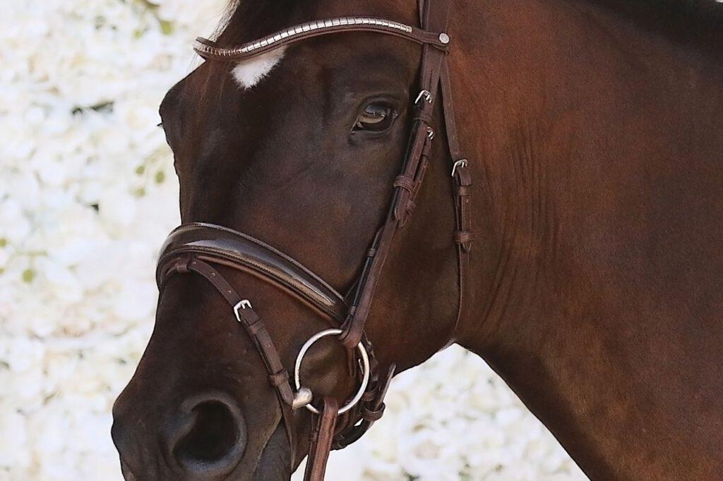 Brun hest fra Montar