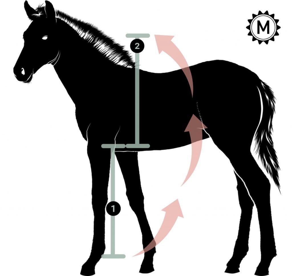 Sigøjnermål hest