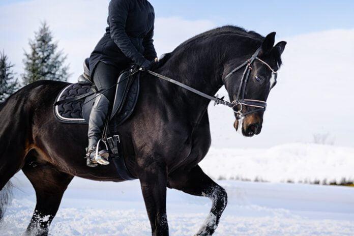 Hest bliver redet i sne