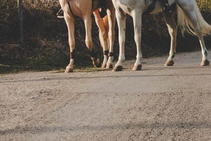 Heste på vej