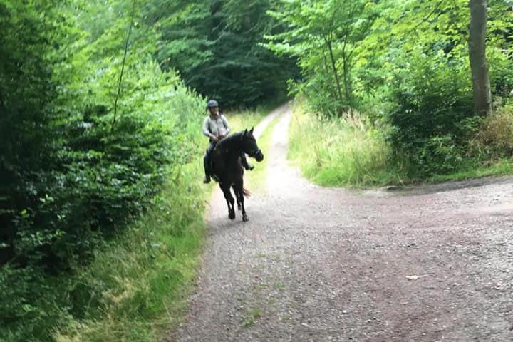 Brun hest i skoven