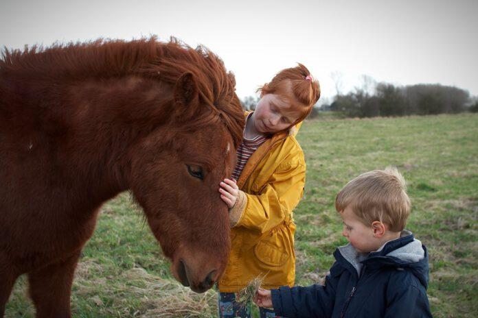 Børn og islandsk hest