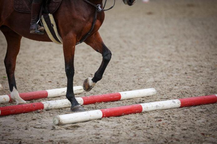 Hest rider over bomme for at styrke mavemuskler.