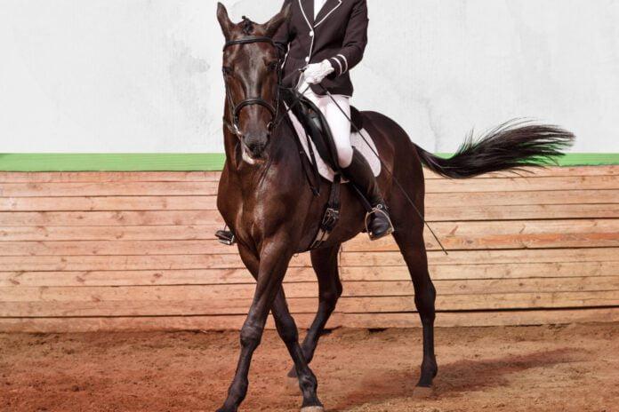 Rytter og hest i ridehus til stævne