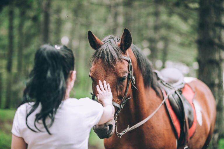 Giver du din hest taletid?