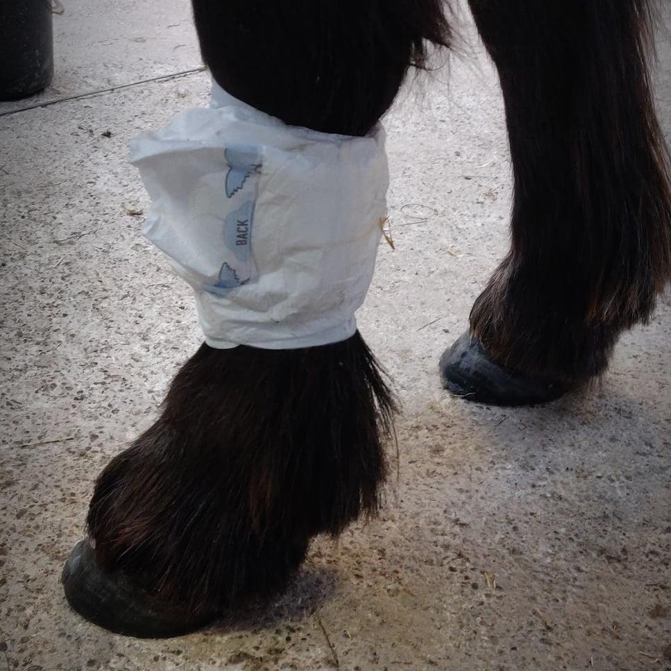 Ble på hestens ben