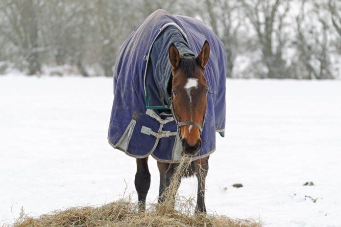 Hest æder hø på vinterfold
