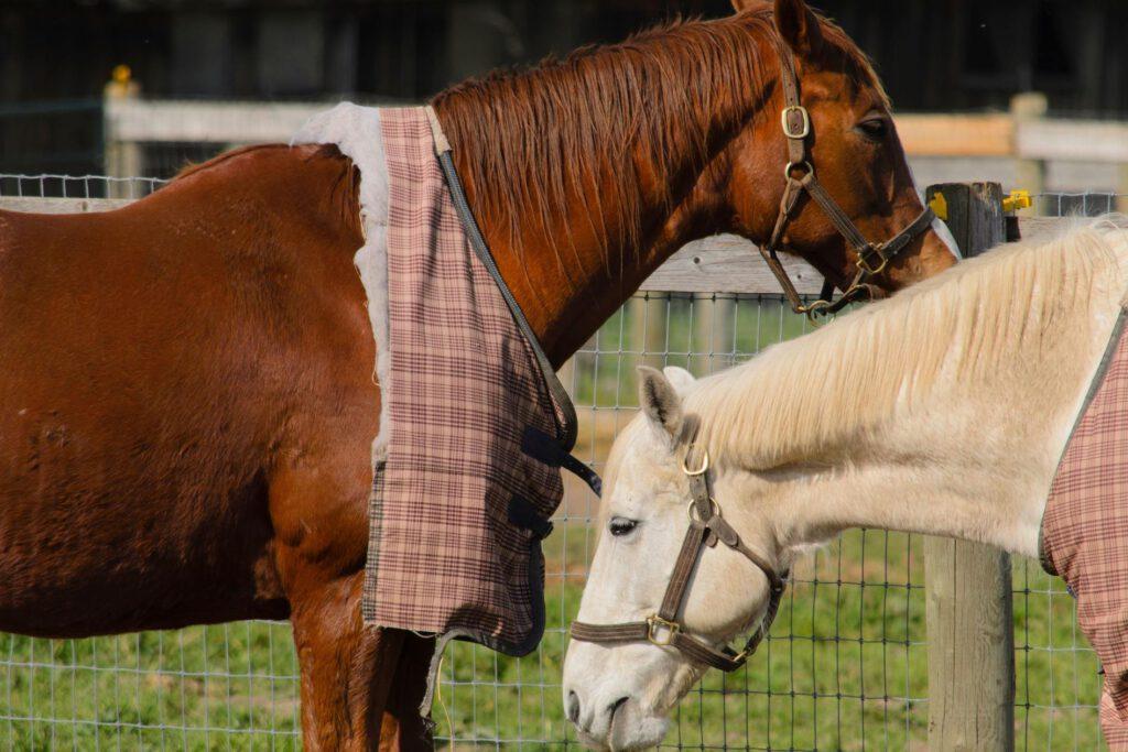 Hest har ødelagt dækken på fold