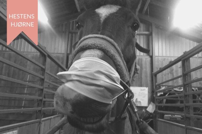 Hest med mundbind