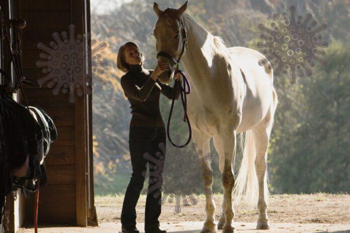 Hest på staldgang under coronanedlukning