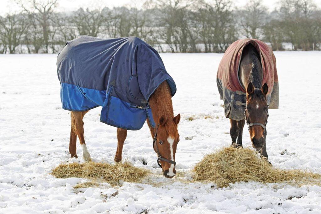 Heste æder hø på vinterfold