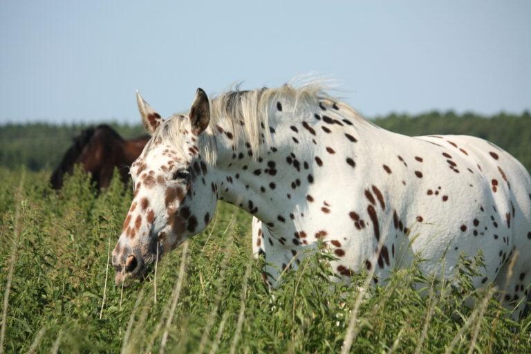 Dét skal man bare ikke sige til ejere af bestemte hesteracer