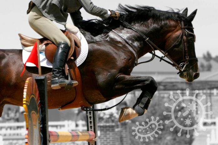 Stævne på trods af corona og hesteherpes