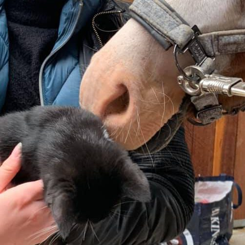 Ponys lyserøde mule