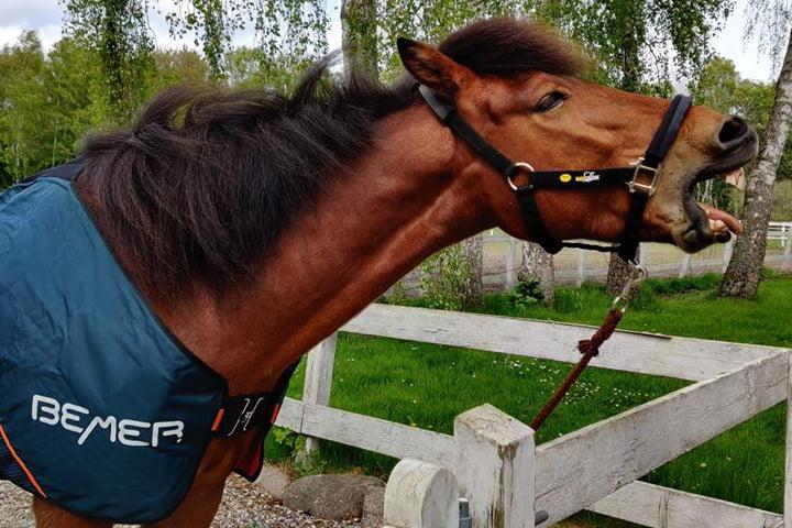 Bemer gabende hest