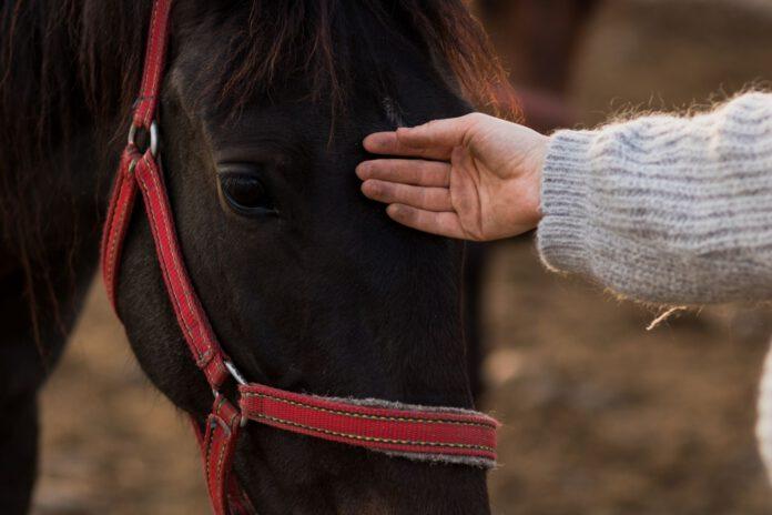 Bekymringer om hesten