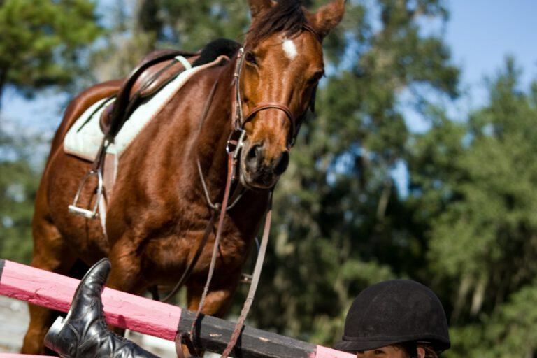Av av av: 5 fald fra hest, som alle ryttere har prøvet