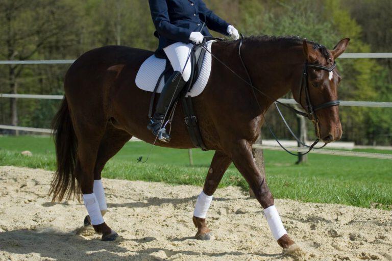 Den vigtige basistræning: Få hesten til at strække sig frem og ned