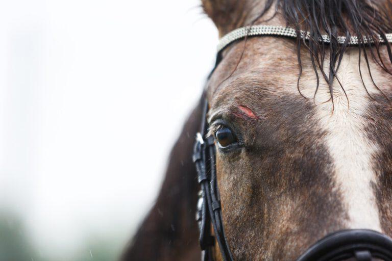 Do's & don'ts: Sådan håndterer du sår hos din hest