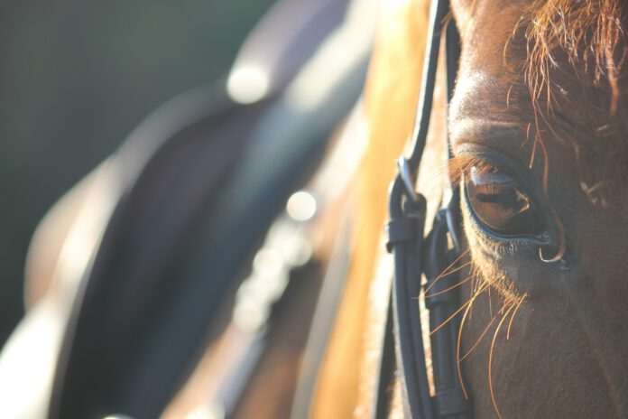 Ride hest