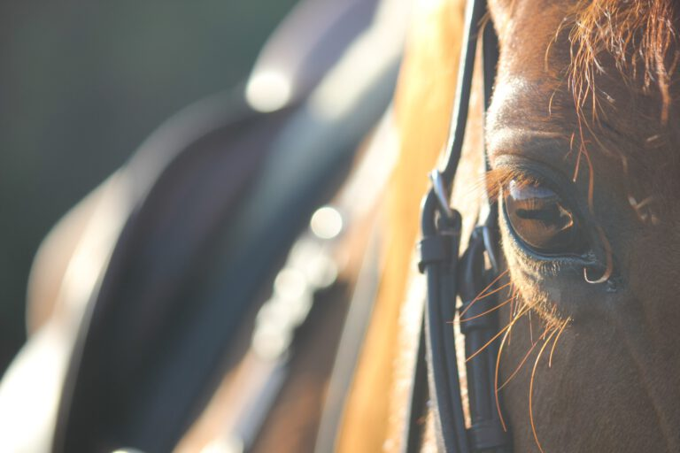 Redaktionens tanker: Hvornår begynder du egentlig at ride din hest?
