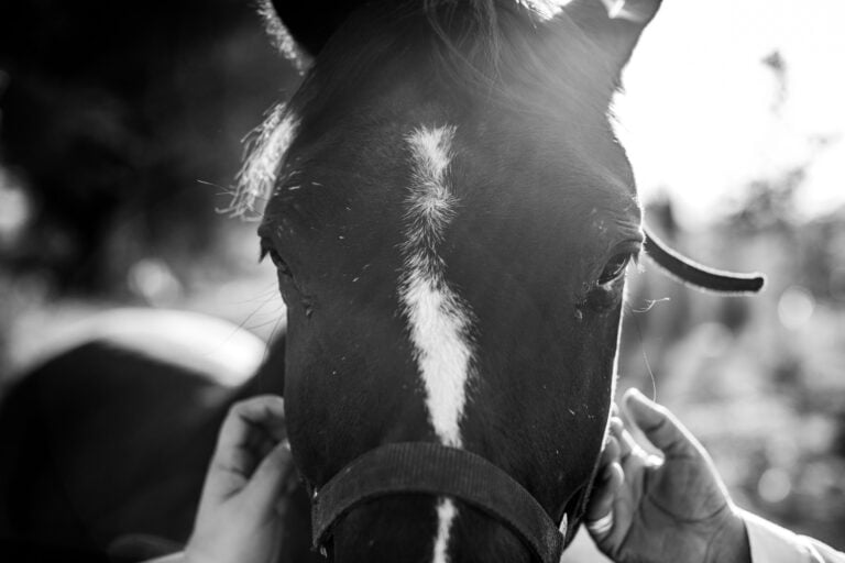 Bekymringer på bekymringer: Derfor er vi så ofte urolige for vores heste