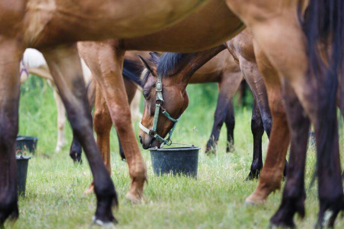 Heste og roepiller