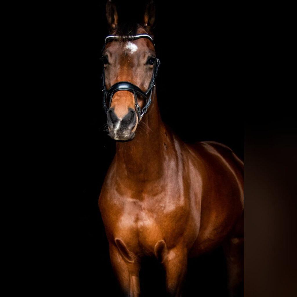 Har du nogensinde taget en vigtig beslutning for din hest?