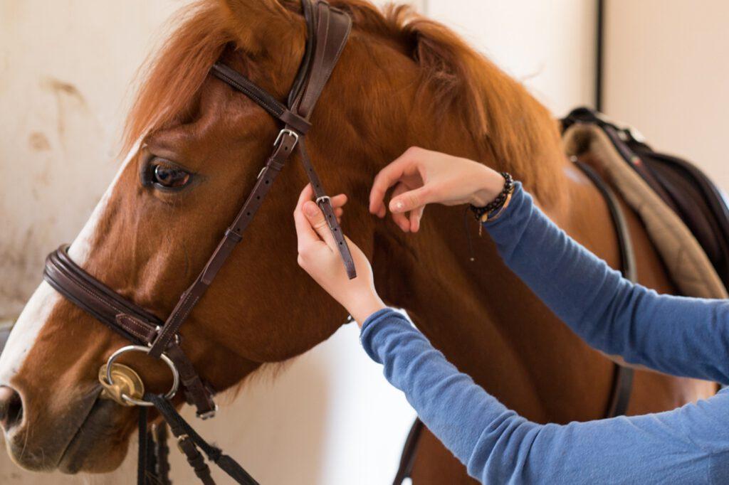 Giver du gode råd, når andre skal give deres hest trense på?