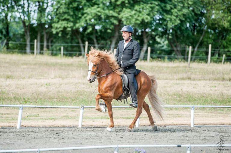 Har du en islandsk hest? Her kan du få det hele til den seje gangartshest