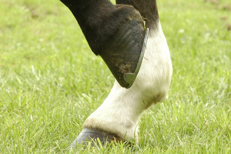 Slut med muk: Sådan blev min hest kureret