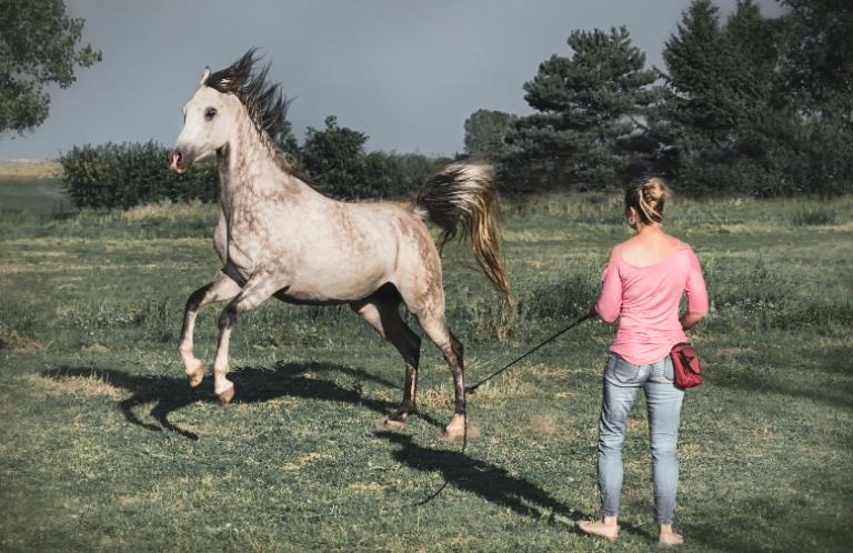Horsemanship: Derfor får hesten glæde af, at du træner dit fokus