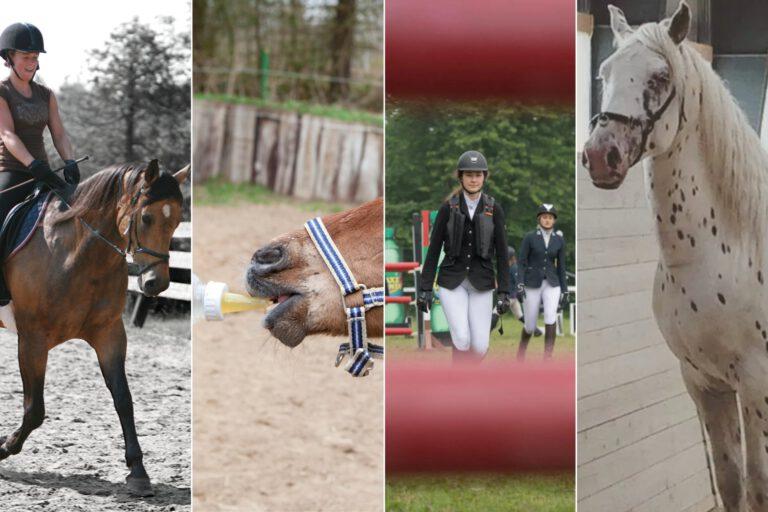 Ugen der gik: Forladte føl, god ponyvelfærd, springning og en rideulykke