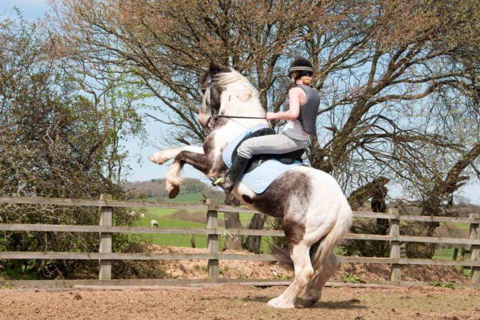 Hest som stejler