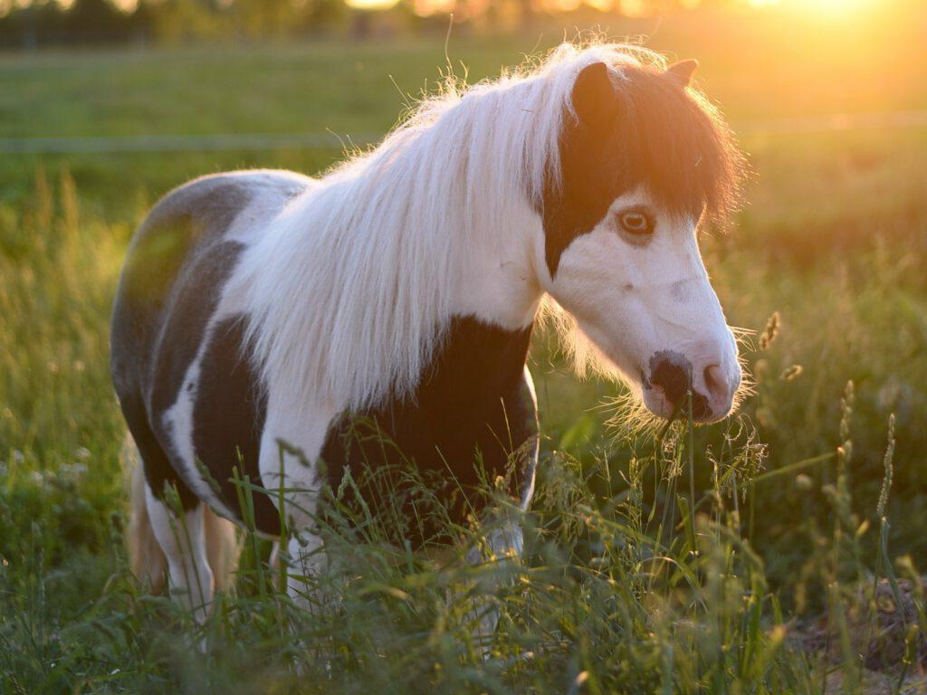 Pony på græs - ugen der gik